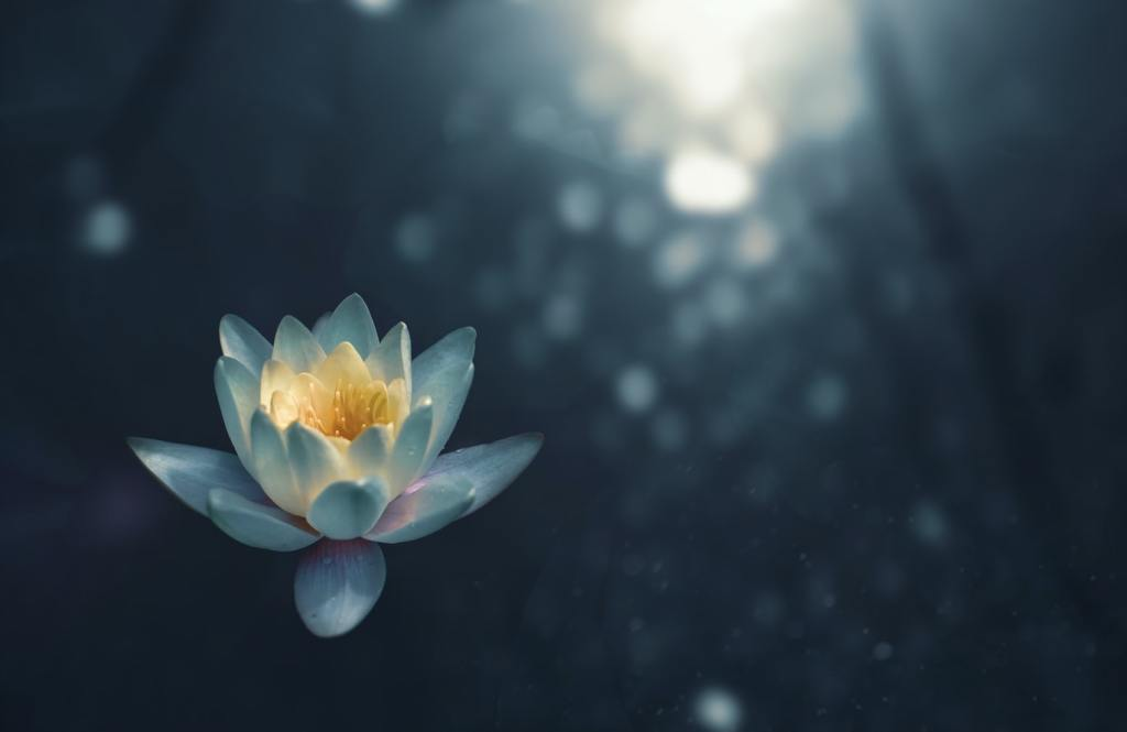 A flower symbolizing the beauty of meditation helping people better understand what is meditation.